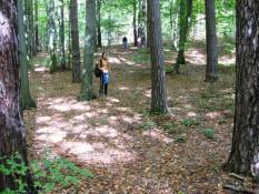 Еолові кучугури з сосновим лісом