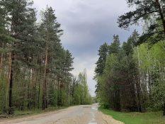 Юлія Лапчик _Лісова дорога_